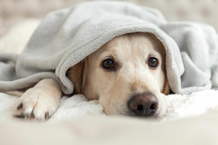 Come educare un animale domestico a dormire nella propria cuccia