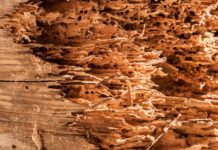 Tarli del Legno: cosa sono e come prevenirli con metodi naturali