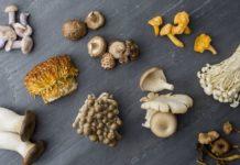 Come pulire i Funghi: tipologie, pulizia, raccolta ed essicazione