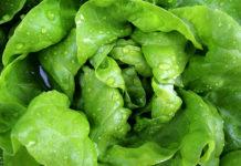 Come conservare più giorni l'insalata: trucchi e metodi