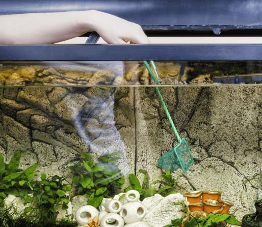 Come pulire l'Acquario dei pesci: cosa occorre e come fare